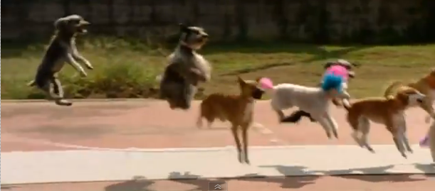 Video of the Week: Skipping Dogs Make World Record