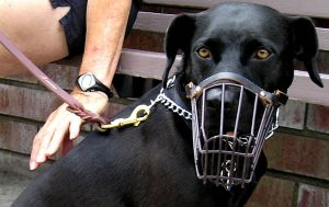 Changes to the law on dangerous dogs