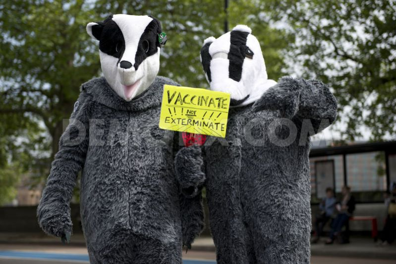 Arrests Over Badger Cull Protests Continue